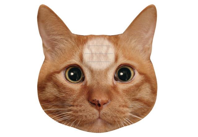 猫の額にあるスペース