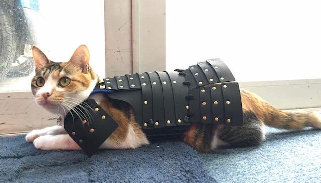 猫鎧の黒を装着