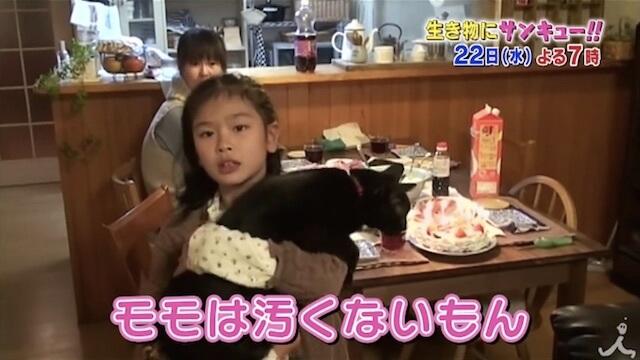 ネコと子どもの成長記