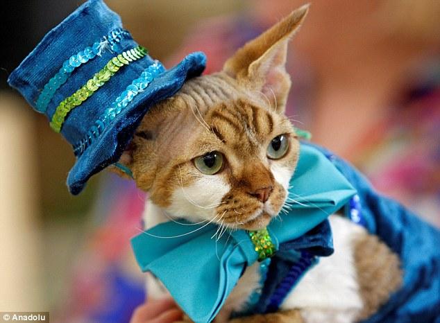 ブルーでコーディネートした猫