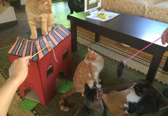 玩具で遊ぶ猫
