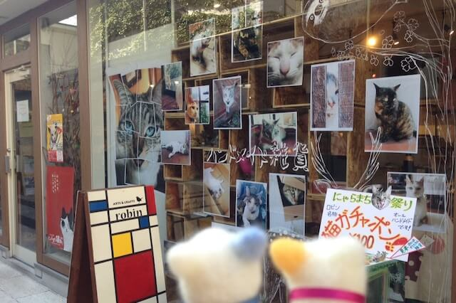 猫オーラが漂う店舗