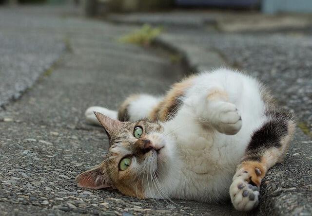沖昌之さんの猫写真2