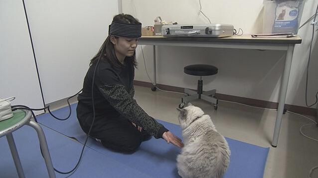 「ネコと人の意外な関係」に科学的に迫る