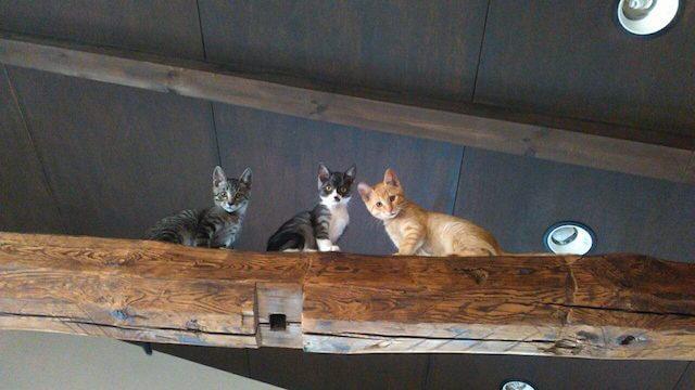 梁の上に登っている猫