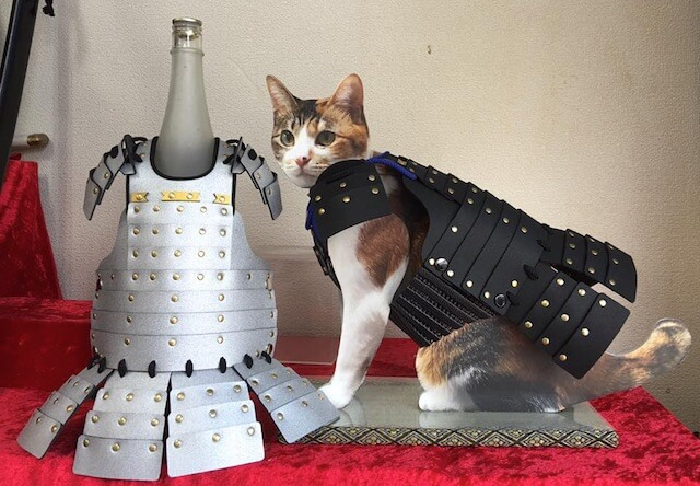 一升瓶に飾る猫鎧