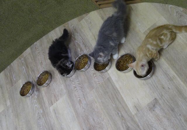 「僕と猫。」のご飯タイム2