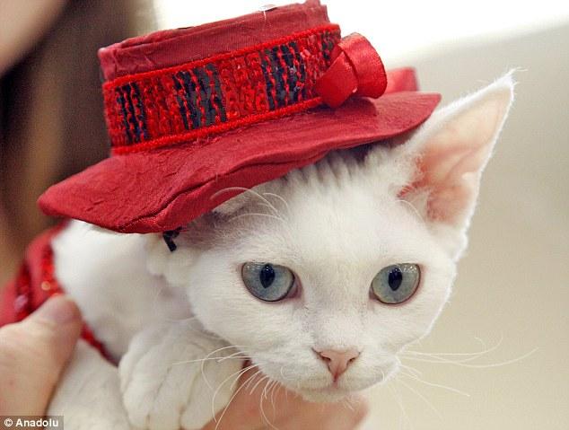 赤い帽子を被った上品な猫