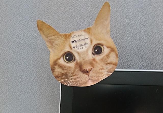 猫がこっちを凝視している付箋