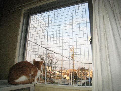 猫の脱走防止フェンス