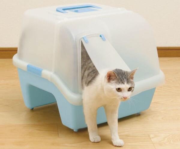 側面から中に入る猫トイレ
