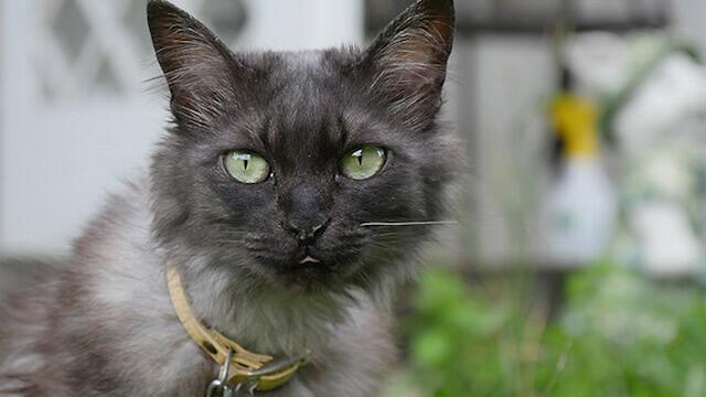 八ヶ岳の猫