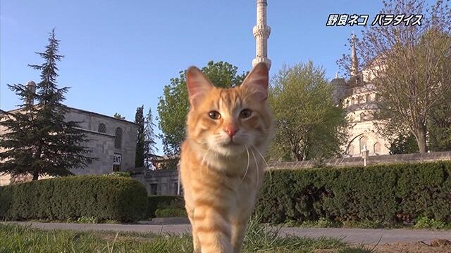 番組に登場する猫4