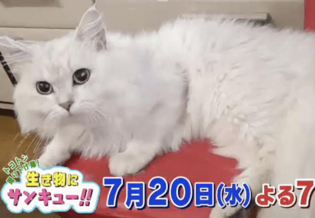 生き物にサンキュー!! 7/20の放送は幸せを運んでくれる猫SP