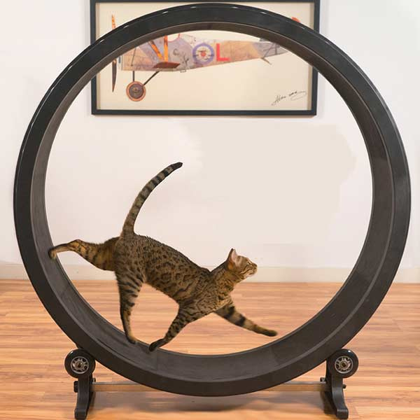 Cat Exercise Wheel(キャット エクササイズ ホイール)