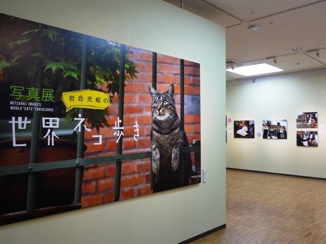 写真展「岩合光昭の世界ネコ歩き」、8/5-8/14に仙台で開催