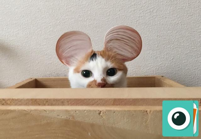 猫の耳をミッキーみたいに丸くするアプリ「サイメラ」の使い方