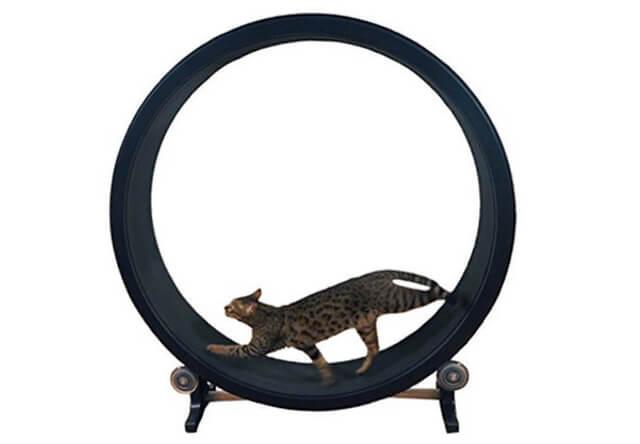 猫用のルームランナー「Cat Exercise Wheel」が日本でも販売開始