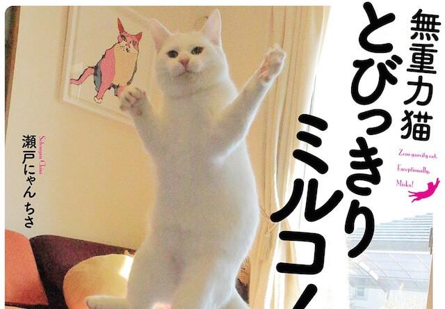 無重力ジャンプ猫「ミルコ」の写真集が発売!写真展も開催中