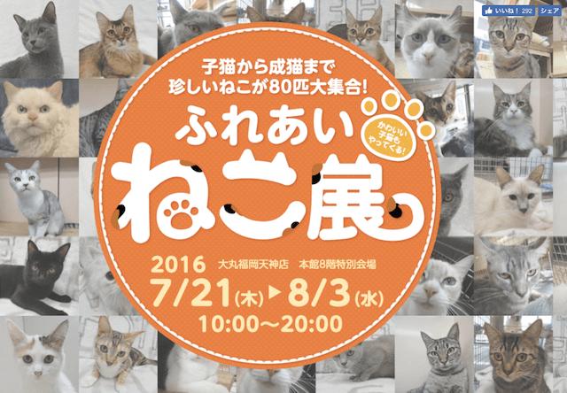 80匹の猫と触れ合える「ふれあい ねこ展」が大丸福岡で開催