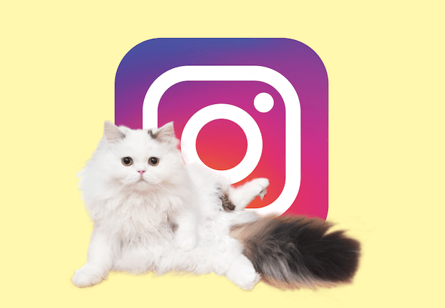Instagramで猫写真キャンペーン、投稿で電子書籍化のチャンス