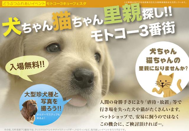 神戸の元町高架下三番街、猫や犬の里親募集イベントを開催