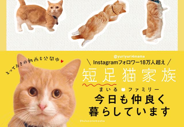 短足猫のまいる、マンチカン・ファミリーの写真集が発売