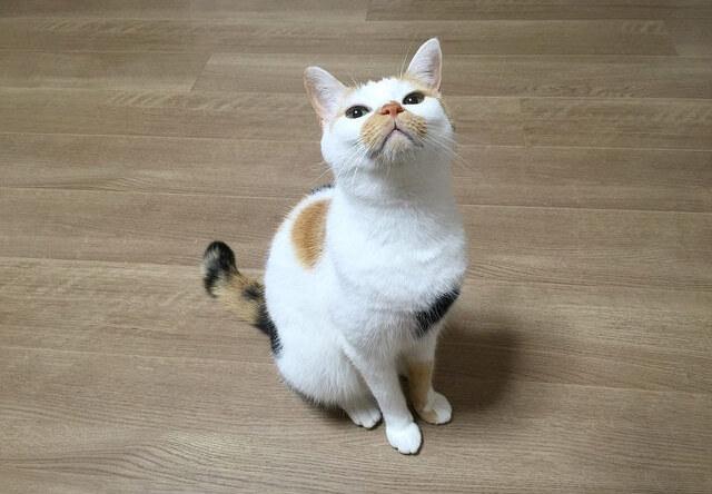 飼い主を見上げる猫 - 猫の写真素材