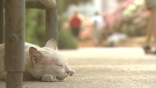 マルタの猫1