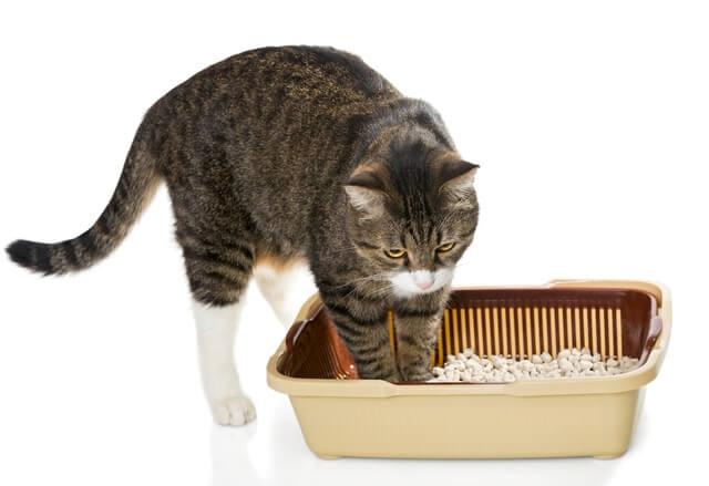 猫のトイレについて悩んでいる飼い主が多い