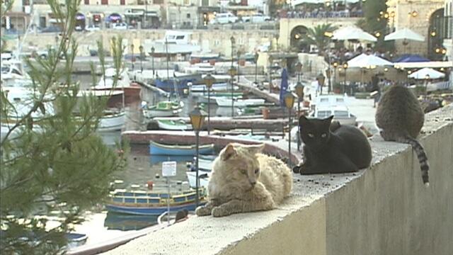 マルタの猫2