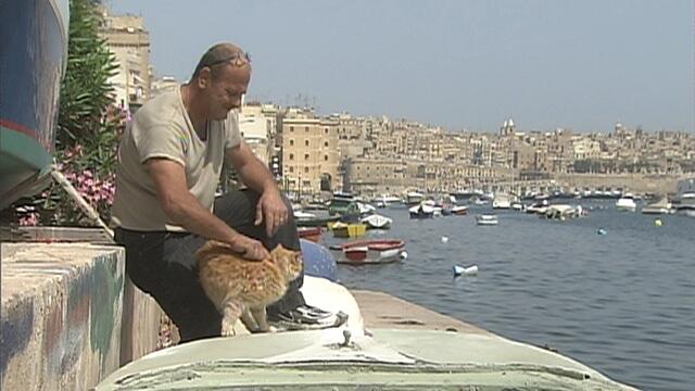 マルタの猫3