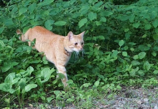 猫の朝の散歩