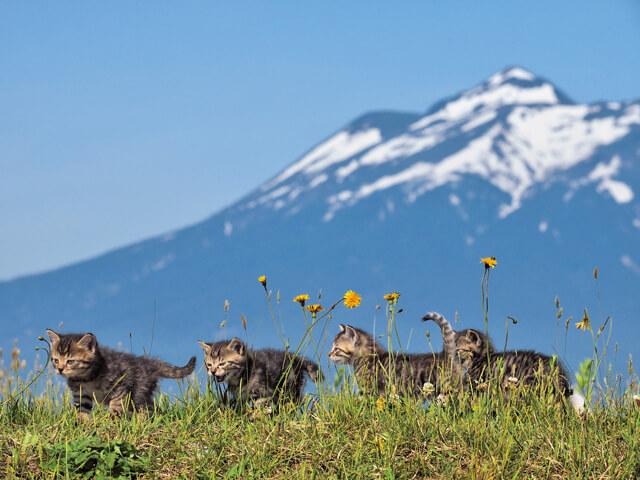 「ふるさと」津軽の猫写真2