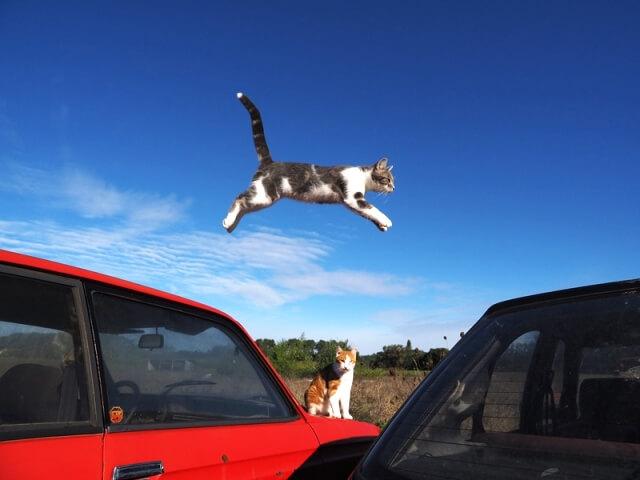 プロバンスの猫