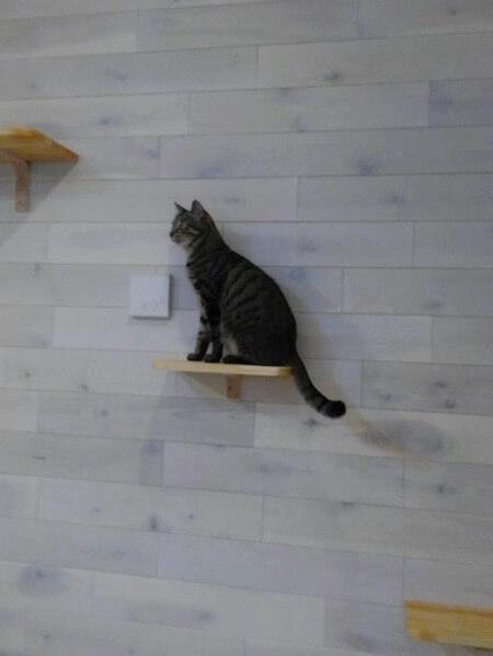 保護猫カフェ「ここねこ」の写真3