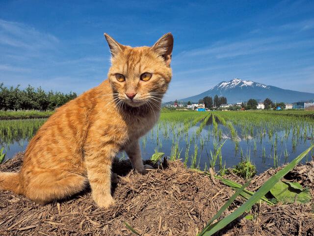 「ふるさと」津軽の猫写真3