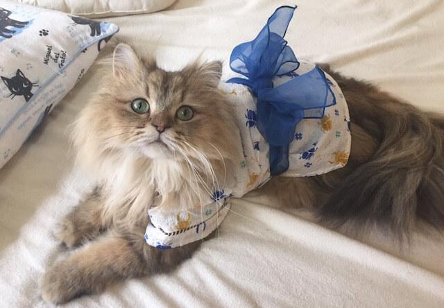 着物・浴衣姿の猫2