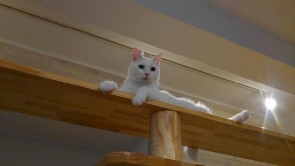 保護猫カフェ「ここねこ」の写真4