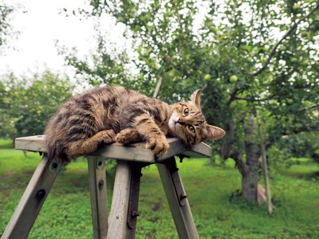 「ふるさと」津軽の猫写真4