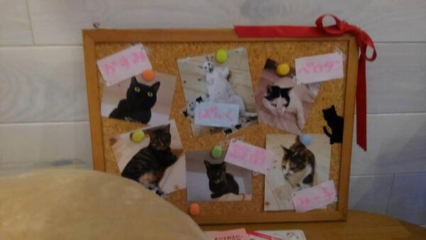 保護猫カフェ「ここねこ」の写真5