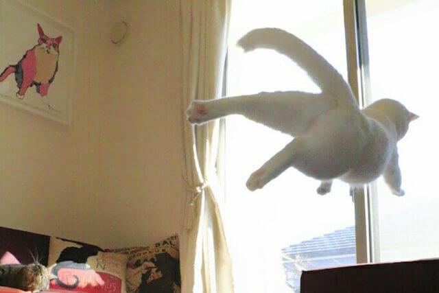 宇宙空間をさまようかのような猫