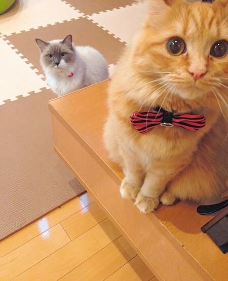 同居の猫のココも登場