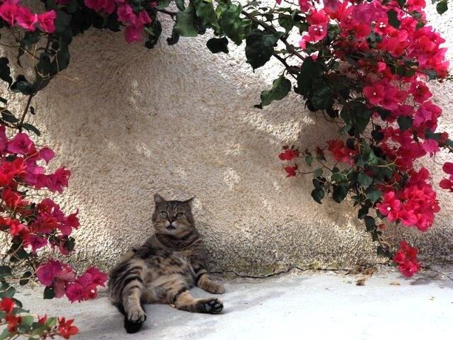 写真展「岩合光昭の世界ネコ歩き」シチリアの猫