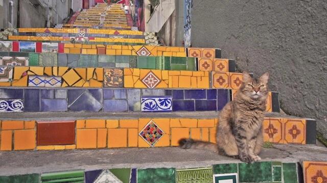 セラロンの階段でたたずむネコ