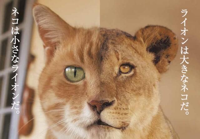 岩合光昭 写真展「ネコライオン」