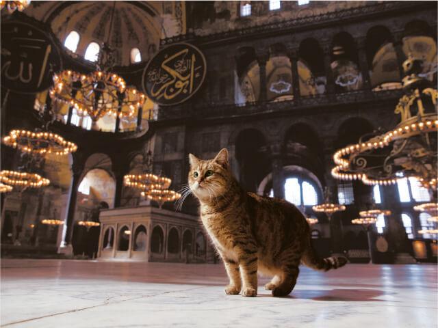 トルコ イスタンブールの猫