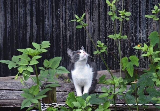 まちかどの猫 太田市長賞