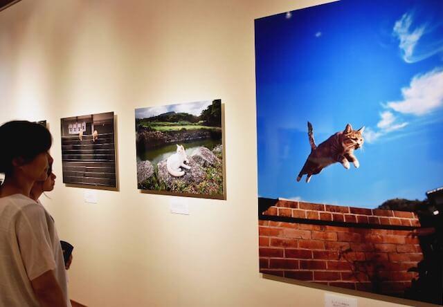 写真展 「やきものの里のネコ」展示イメージ