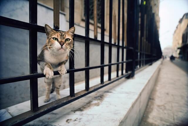 エジプト・カイロの猫